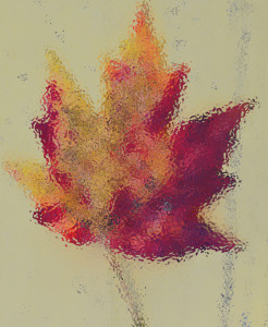 Maple Leaf - Water