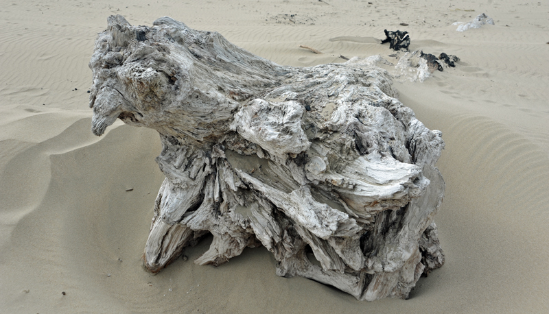 Oregon - Driftwood