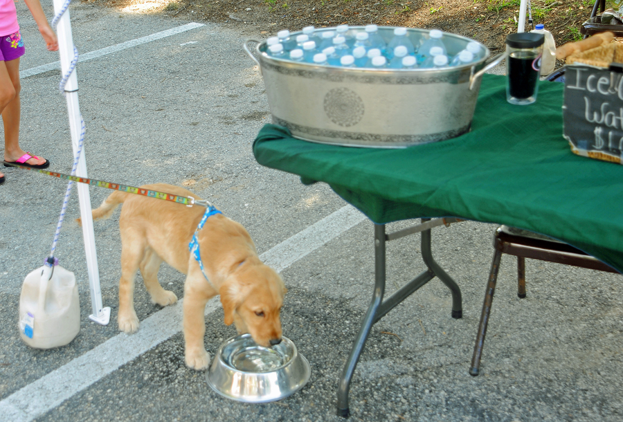 Dog water = Free   -   People water = $1.00