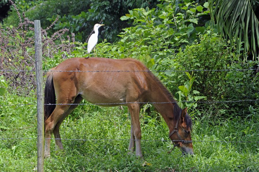 bird on horse