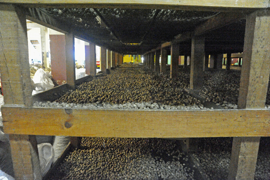 Nutmeg Processing Center - Grenada