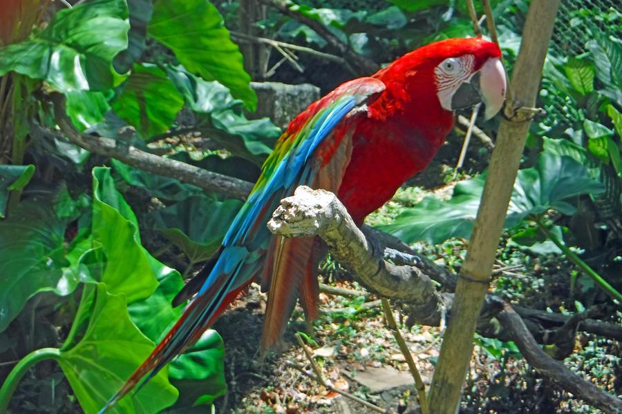 Thousands Islands Birds