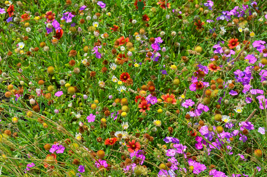 A sampling of the wildflowers