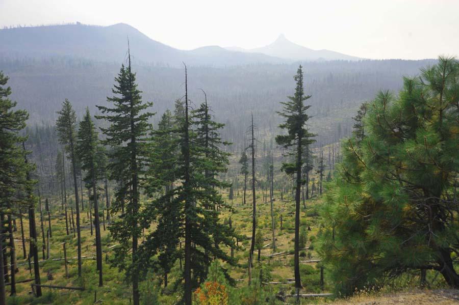 Oregon Forest Rejuvenation After Fire Mt Washington In