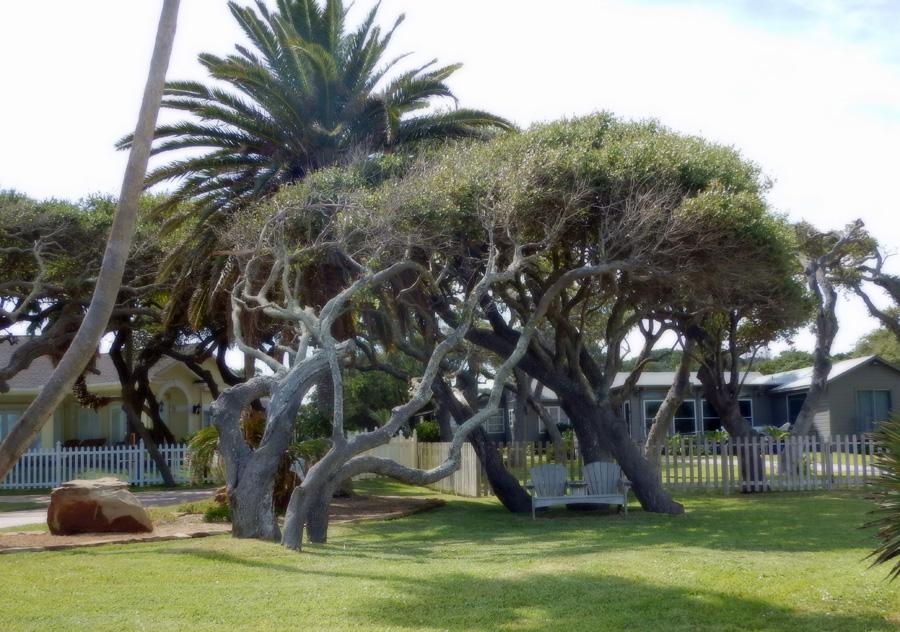 windy trees-ready2