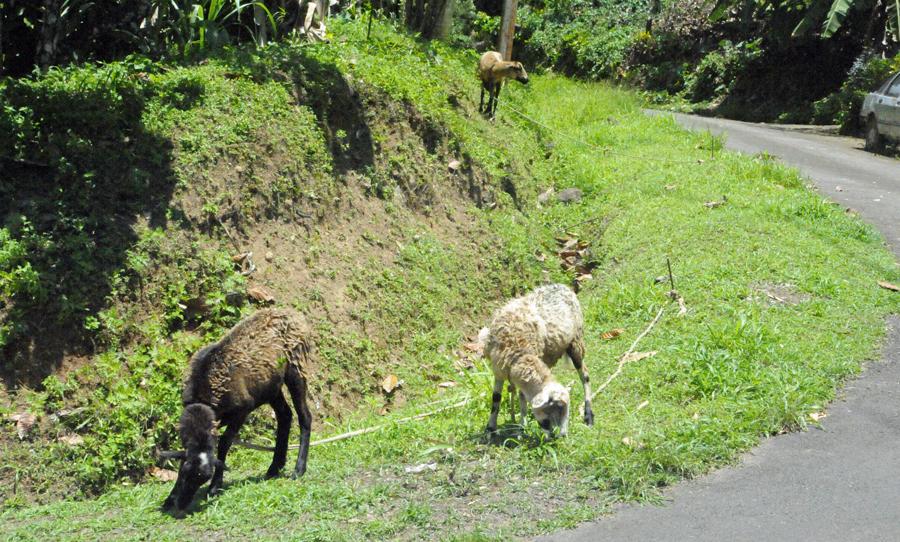 Grenadian Lawn Mowers