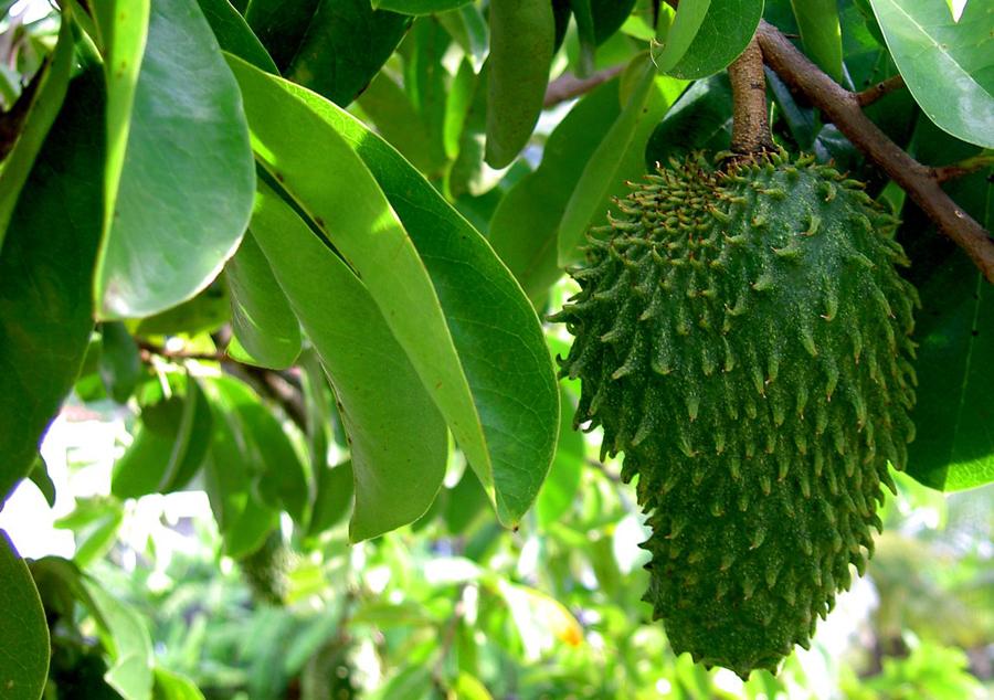 Sourop Fruit