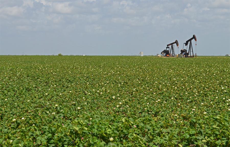 Oil wells in a cotton field