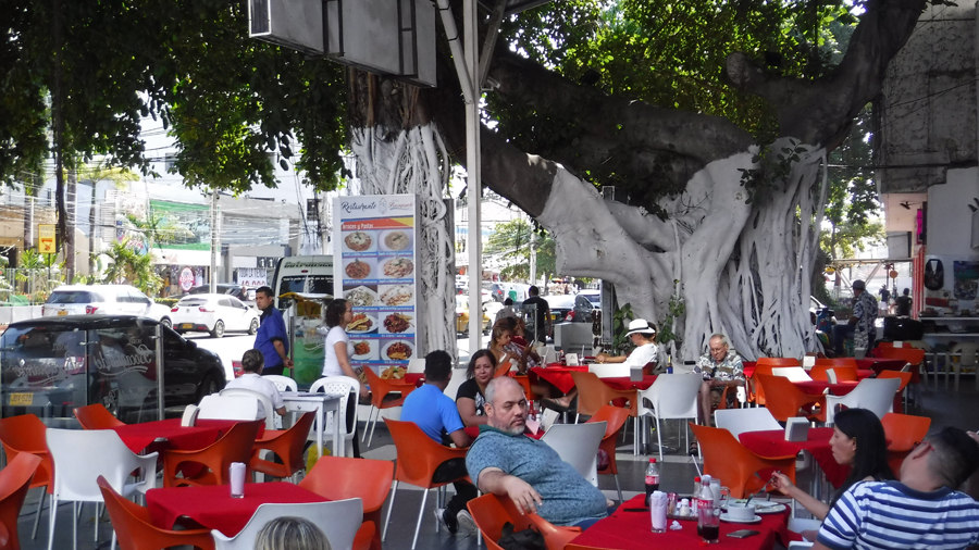 Shade is a precious commodity - a street-side cafe under a massive banyan tree