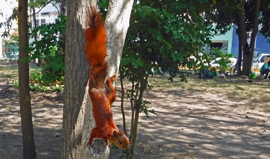 Cindy snapped this great picture of a red squirrel