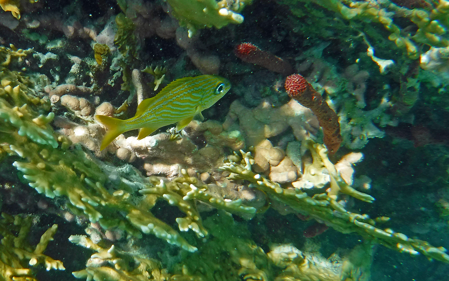 The colors are vibrant because of the clarity and shallow waters