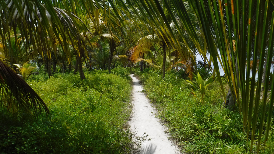 Walking the lush green trail just back from the beach I could smell the plants