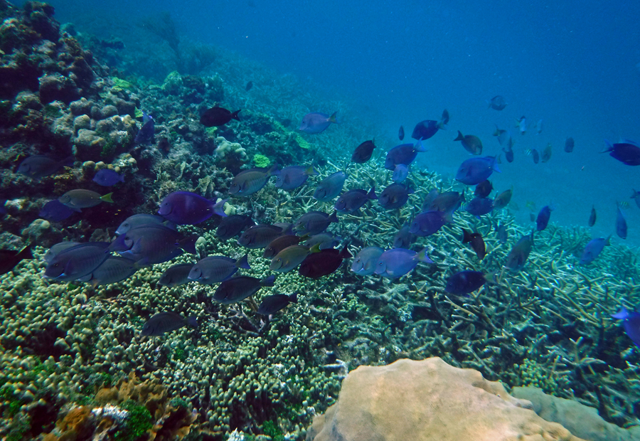 Tons of fish on the dense coral reef